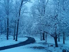 Early Morning Snow (palmerstan60) Tags: snow snowytrees winterscene wintrymorning