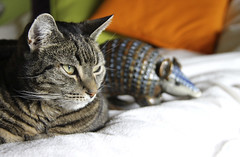 075/366 Once You Let an Armadillo in Your Bed… (ruthlesscrab) Tags: cat chat gato katze armadillo wah werehere fantastrophe crazyisgood day75366 hereios 366the2016edition 3662016 15mar16