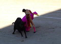 Capeando (aficion2012) Tags: france fight sebastian capa bull toros arles francia corrida toro toreador capote capea faena matador torero toreo castella capear garcigrande capeando capeador