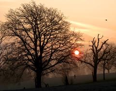 #39 Something in the sky (padswift) Tags: sunrise spring lewisham brockley hillyfieldspark hillyfields se4 londonboroughoflewisham somethinginthesky coldmornings lewishamparks parksinlewisham parksinsoutheastlondon parksinbrockley dawnrisinginbrockley sunriseinsoutheastlondon coldmorninginbrockley