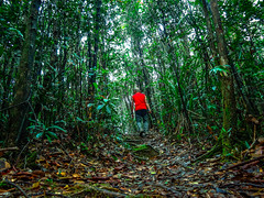 A cold wind was blowing from the north, and it made the trees rustle like living things. (thegunznroses1904) Tags: tree forest walking freedom hiking hike terengganu threes budgettravel travellight hikemate travelasrar uaresmall