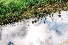 Slootkant (MJ Klaver) Tags: reflection water grass rain 35mm landscape m42 flektogon drenthe czj carlzeissjena primelens scharreveld oldlens ausjena manualfocuslens carlzeissjenaflektogon35mmf28 ddrlens