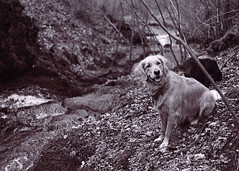 Ziggy politely staying calm long enough for me to get a sharp photo! (Chris B70D) Tags: sky white black film water 35mm print outdoors photography aperture scenery exposure exploring grain first scanned manual miranda attempt settings develop 7x5