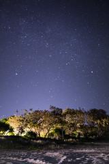 Noosa Beach At Night (lnevay) Tags: trees stars australia galaxy astrophotography noosa milkyway