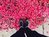 Floortraits Bed Of Roses Bernalwood at Bernal Heights (spieri_sf) Tags: bedofroses bernalwood floortraits