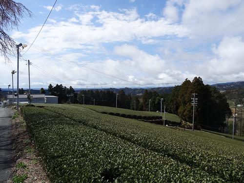 金谷〜袋井(ホントに歩いて小夜の中山で子育て飴)