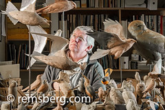 A man and his wooden bird carvings in his studio in Pennsylvania. (Remsberg Photos) Tags: wood usa man bird art studio artist pennsylvania wildlife craft indoors carver carvings oneperson skill stahlstown