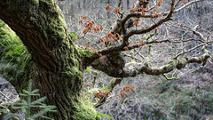 160416Lanark2482ftmw (GeoJuice) Tags: scotland geography lanark clydevalley fallsofclyde geojuice