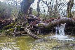 """wasserfall_baum • <a style=""""font-size:0.8em;"""" href=""""http://www.flickr.com/photos/137809870@N02/25955634752/"""" target=""""_blank"""">View on Flickr</a>"""