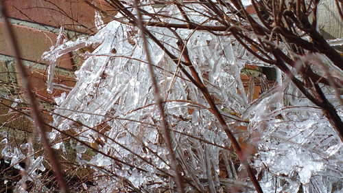 Iced branches below a dripping roof