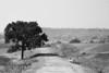 | ગ્રીષ્મ | Summer (VisualsDiary) Tags: world summer blackandwhite india canon landscape rajasthan | banswara canon6d worldwidelandscapes harshshahphotography ગ્રીષ્મ summerarrived
