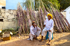 Smoke break... (mehtasunil) Tags: purple pushkar relex rajasthan hawkers sugarcane smokebreak ruralindia indiapictures leicalens leicaq leicaforum yellowturban leicaimages leicaindia indiashutterbugs