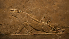 The Lion Hunt - Assyrian sport of Kings ( 650 BC)  : British Museum (dirk huijssoon) Tags: london hunting lion britishmuseum lionhunt assyrian
