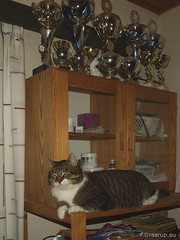 Bastian on the shelf (Finn Frode (DK)) Tags: pet cats animal cat denmark indoor olympus shelf rest mixedbreed bastian domesticshorthair omdem5