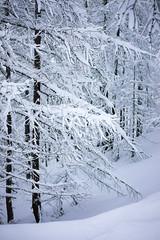 Morning Snow (Ben Suda) Tags: mountain snow alps sony alpine matterhorn sonycamera cervino suda breuilcervinia sonya7