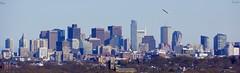 Eagle Flies Over Boston (Harry Lipson) Tags: panorama boston skyline cityscape skyscrapers eagle birding baldeagle birdwatching americanbaldeagle birdwatch harrylipsoniii harrylipson thephotographyofharrylipson