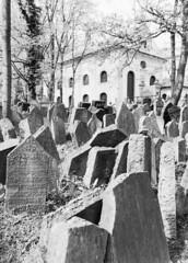 Old Jewish Cemetery II (holtelars) Tags: blackandwhite bw 120 film monochrome rollei analog mediumformat 645 prague pentax praha czechrepublic analogue 6x45 gravestones f28 45mm czechia 100iso pentax645 filmphotography rodinalspecial oldjewishcemetery classicblackwhite 645n rpx homeprocessing filmforever smcpentaxfa r09spezial rpx100 rolleirpx100 larsholte compardr09spezial