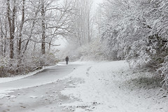 (wsifrancis) Tags: winter usa snow america unitedstates michigan annarbor  universityofmichigan  2015 nicholsarboretum