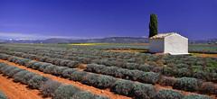 Ciel de Provence.......... (Malain17) Tags: france nature clouds photography image pentax couleurs champs photographers bleu ciel provence paysage lavande arbre montagnes cabanon sillons