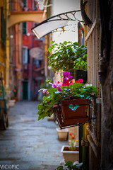 Colorful alley, Lerici Italy (Vic Zigmont) Tags: flowers italy colorful bokeh lerici
