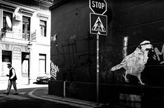 walk of life (Zlatko Vickovic) Tags: blackandwhite monochrome serbia streetphotography novisad vojvodina srbija streetbw streetphotographybw streetstreetphoto streetphotobw zlatkovickovic zlatkovickovicphotography