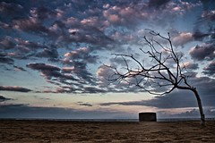 Tree of substance (yusof majid) Tags: blue sunset sea sky bali tree beach water clouds season landscape island sand horizon cotton openspace nusadua thered beacheslandscapes cloudsstormssunsetssunrises