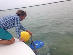 Trap deployment (MyFWC Research) Tags: fish conservation research bahamas larvae genetics abaco marinelife bonefish fwc albulavulpes lighttrap leptocephalus myfwc myfwccom bonefishandtarpontrust