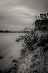 powlett river estuary x (Kenneth Rowe) Tags: longexposure sunset greyday icm multipleexposures powlettriver d7000 powletriver
