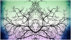 Mantis Meditation (kaleynelson) Tags: trees abstract tree nature landscape meditate symmetry mirrored symmetric symmetrical meditation psychedelic spiritual chakra chakras alexgrey sacredgeometry kaleynelson