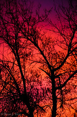 Human Soul #43 (TrojanHorsePictures) Tags: winter nature colors sunrise hike soul