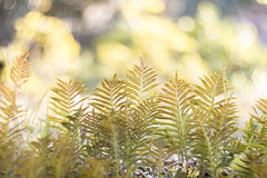 (Xavier Ligonnet (Daftlive)) Tags: sunset sun cute green love beautiful grass yellow gold dirt flare dope turning helios blokeh bokehmonster