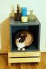 Ginger (Sandra Londono) Tags: cats vintage glasses kitten box kitty kittens dec gato boxes