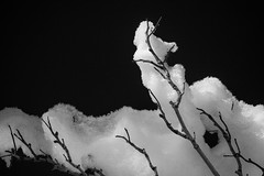black ice (photos_without_borders) Tags: winter blackandwhite bw snow tree monochrome blackbackground canon colorado outdoor tokina ftcollins horsetoothresevoir canonusa canon7d tokina1116