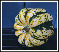 Sweet Dumpling Squash (III) (gtncats) Tags: autumn stilllife food fall nature canon squash canonpowershot sweetdumplingsquash photographyforrecreation canong16 canonpowershotg16 infinitexposure