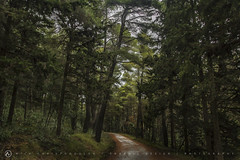 Path in the woods (nikhrist) Tags: trees winter forest woods path nick greece parnitha attiki christodoulou