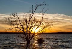 Flood Lake Sunset (cwhitted) Tags: sunset canon eos chathamcounty jordanlake canoneos400d canoneosdigitalrebelxti canonef28135mmisusm beverettjordanlake