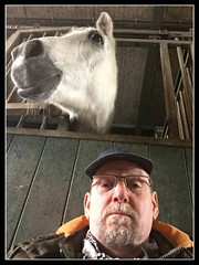 Gezellig Saampjes (gill4kleuren - 11 ml views) Tags: horse white love me beauty fun outside happy riding together gill anisa paard pret hengst arabier saampjes