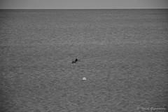 Möve und Enten (Frank Guschmann) Tags: winter vacation holiday beach strand nikon urlaub balticsea rügen ostsee binz rugia d7100 frankguschmann nikond7100