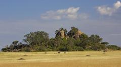 Serengeti Kopje 02 (lbergman100) Tags: africa tanzania buffalo safari serengeti grassland savanna kopje