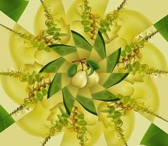 grusha pear droste &kaleidescope (sallyanne58) Tags: 2 green yellow fun pattern pear layers droste grushapear