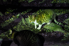 Today's Cat@2016-02-08 (masatsu) Tags: cat pentax catspotting mx1 thebiggestgroupwithonlycats