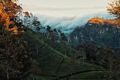 Sri Lanka, sunrise (Barbora Vyl) Tags: trip travel holiday nature beauty sunrise asia tea hike adventure explore srilanka