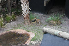 SAM_3463 (Michael Supinski) Tags: florida alligator baldeagle deer turaco jaguar bobcat lorikeets sandhill cassowary warthog hyacinthmacaw bluemacaw brevardzoo cockiel
