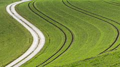 Feld mit Wintergerste (bolliger51) Tags: schweiz landwirtschaft feld bern che feldweg weg acker emmental kurve getreide gerste getreidefeld kurvig hordeumvulgare heimiswil wintergerste wintergetreide getreideacker saatbahnen