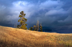 Alone Against The Storm (slarsen327) Tags: storm tree field grass weather clouds landscape outdoor yellowstone prairie