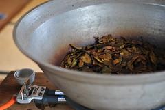 Kyobancha, leaves (Obubu Tea) Tags: greentea kansai japanesetea wazuka handprocess obubu kyobancha