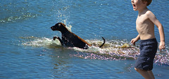 Play Time (swong95765) Tags: boy dog water fun play run chase fetch retrieve
