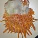 Spondylus versicolor (golden thorny oyster) 2