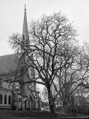 Hagakyrkan (swedeshutter) Tags: white black tree classic church gteborg gothenburg churchtower trd greyscale svartvit hagakyrkan klassisk kyrktorn grskala