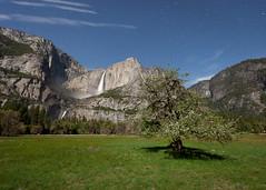 Yosemite Falls Under a Full Moon (Jeffrey Sullivan) Tags: california park copyright usa moon fall jeff nature night canon landscape photography star photo nationalpark village may trails falls full national valley yosemite yosemitenationalpark sullivan 2011 jeffsullivan 5dmarkii yosemitefallnightstartrailsyosemite parknatioyosemite